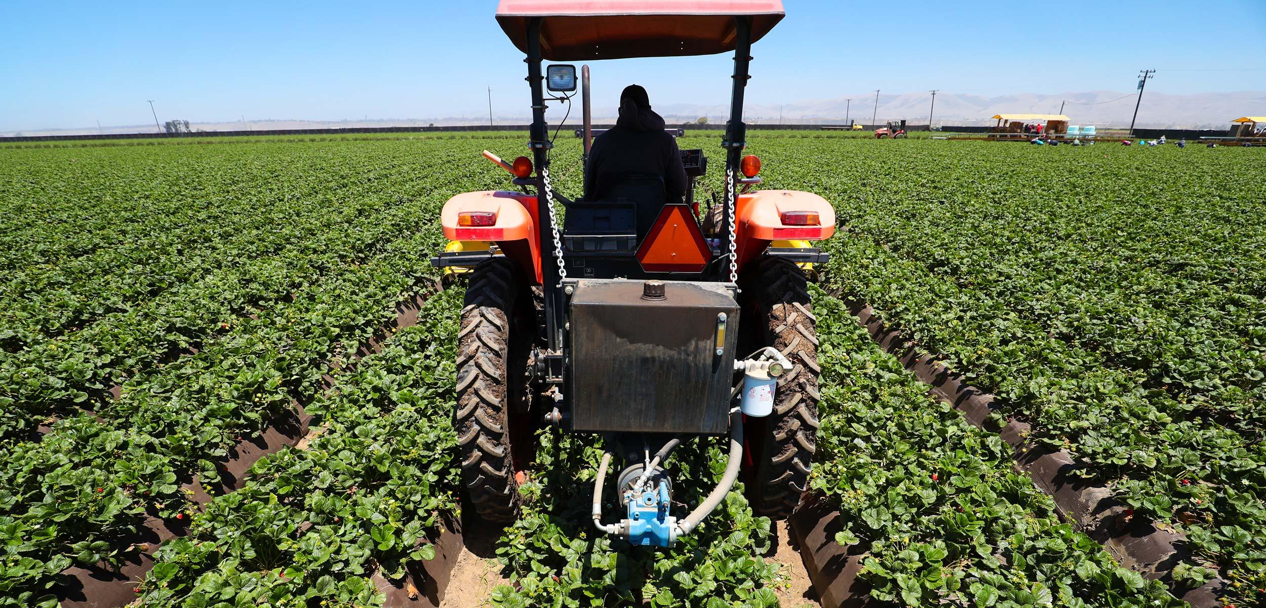 Main-Street-Produce-Farm-Tractor-Field